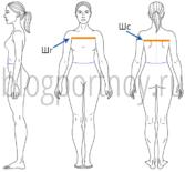 Как снять мерки для построения выкройки плечевого изделия